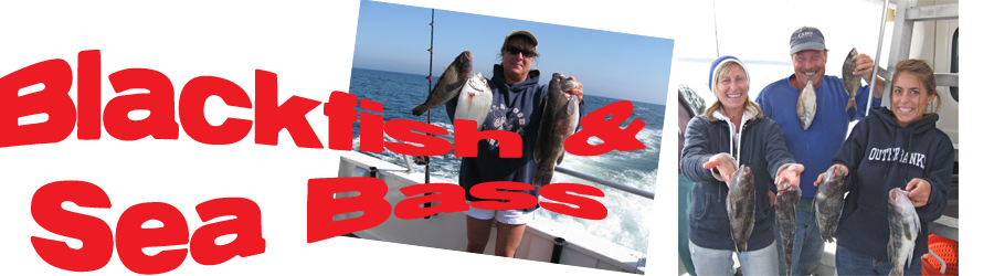 Sea Bass and Blackfish fishing on the Jersey Shore and New York Bight