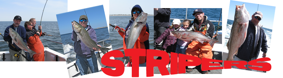 Strped Bass Fishing Along the Jersey Shore and New York