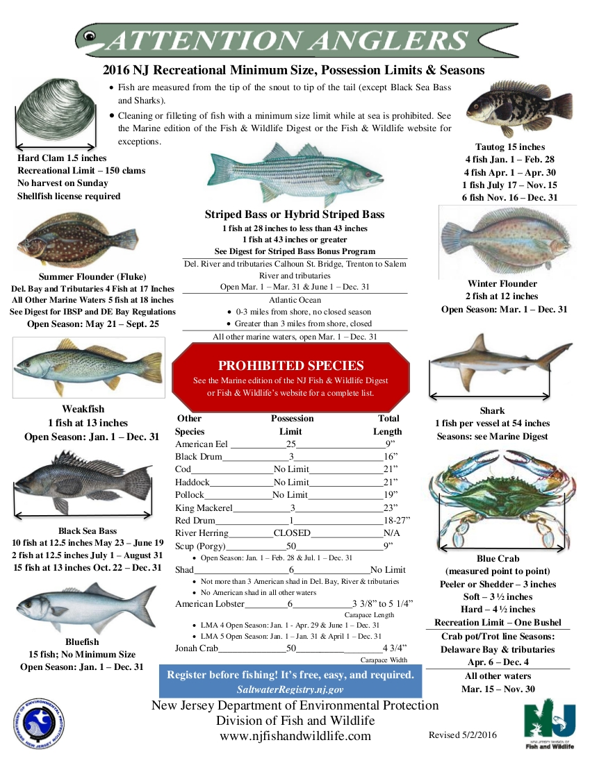 Home for Lbi fishing charters